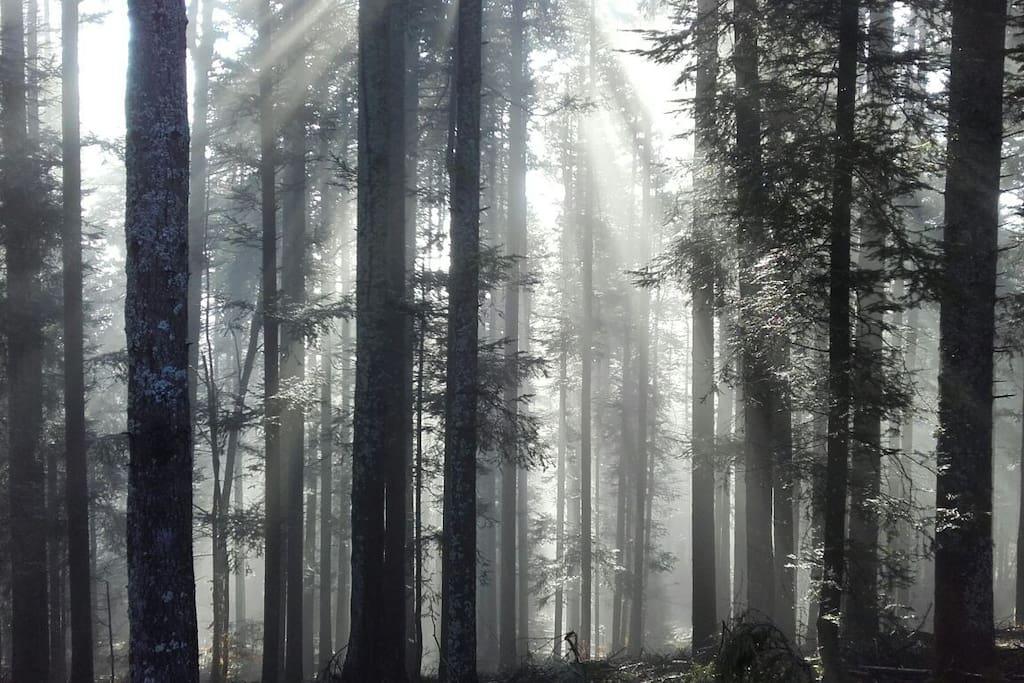 la forêt est a deux pas de la cabane