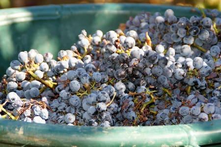 Au sein du domaine viticole du Mas Las Prades,