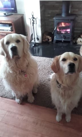 Ollie and Daisy ready to welcome you !