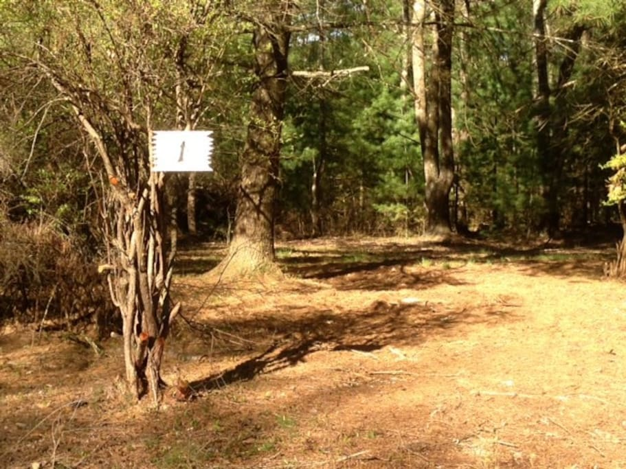 Camp Site #1