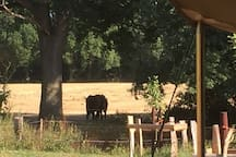 Safaritent op Landgoed