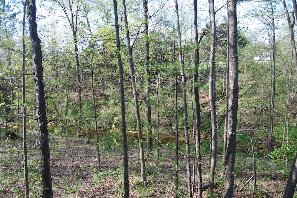 Back wooded area with creek running through