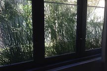 Looking out of studio windows on to the garden