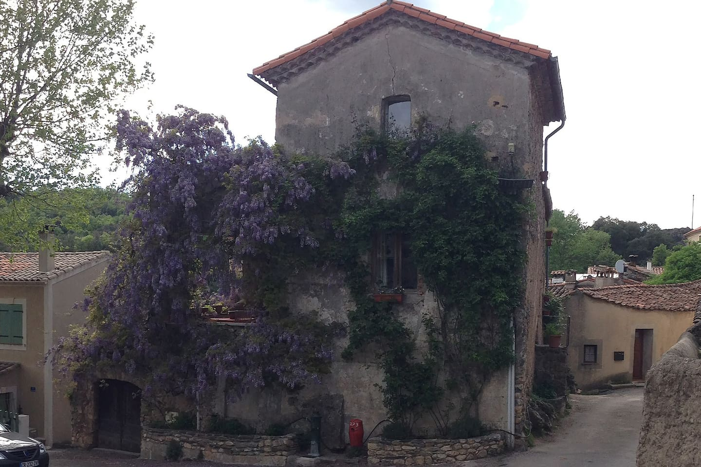 Wisteria! Roses about to bloom all over house! Taken May 2013