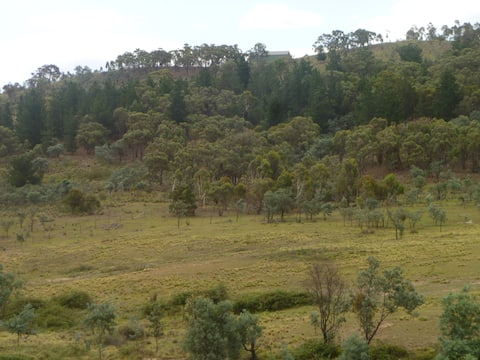 Family & pet friendly cottage, close to Canberra.
