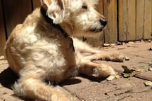 Murray, a sweet 7-year old terrier/poodle mix and shelter adoptee, lives in the back house.