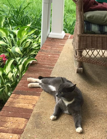 Cosmo, our super friendly outside cat. He will snuggle the heck out of you if you give him any attention.  He is chilling on the front porch which has a swing.