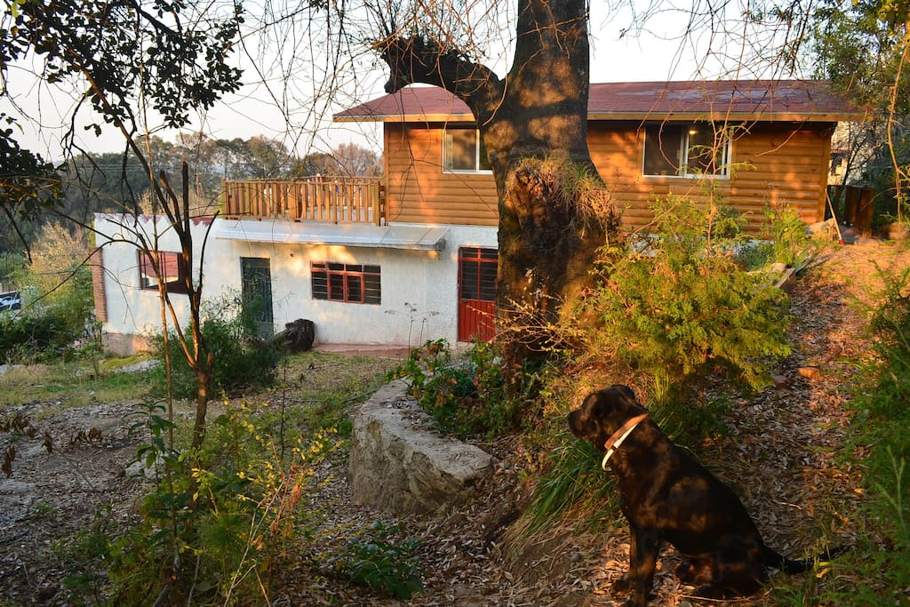 The New Wooden Cabin and our Dog