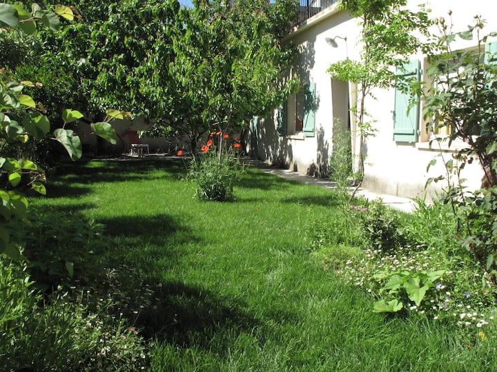 Quiet Marseille, under the fig tree