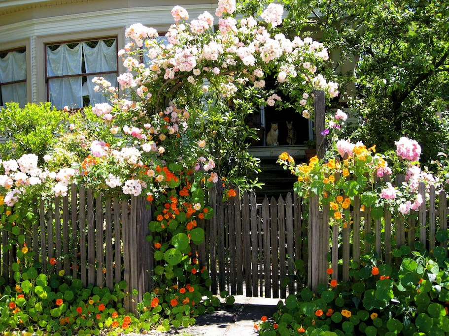 Roses  in the merry month of May. Jupiter and Pepe in the doorway.