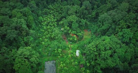 Kalinga Mańe -Rainforest stay in the land of Kings