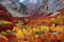 El Otoño en el Pirineo. Una de las estaciones más bonitas y llenas de color. Época de recoger setas!