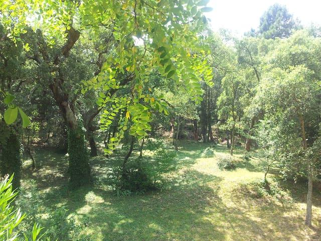 Charmante petite maison provençale 3* dans hameau