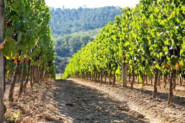 Nearby farm for yr wine tasting