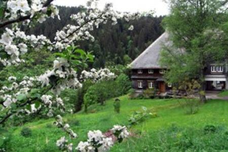 Baschnagelhof- abseits in der Natur - Sankt Blasien - Apartment