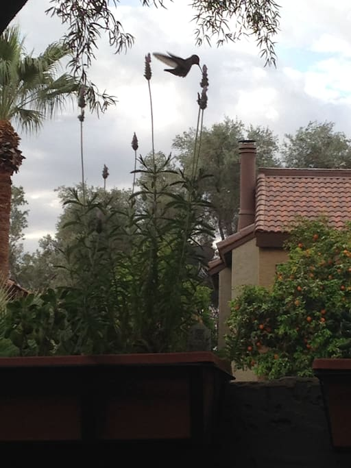 View from Patio sitting at table. Hummingbirds frequent the patio.