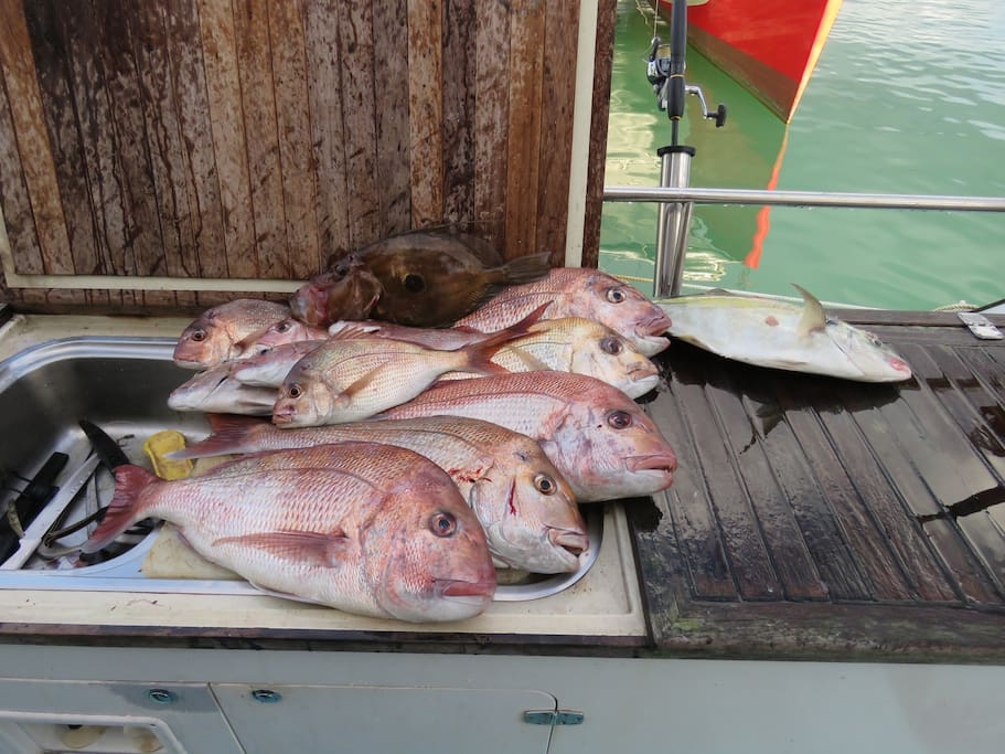 John Dory, Terakihi and the rest are Snappa - yes the little one is legal