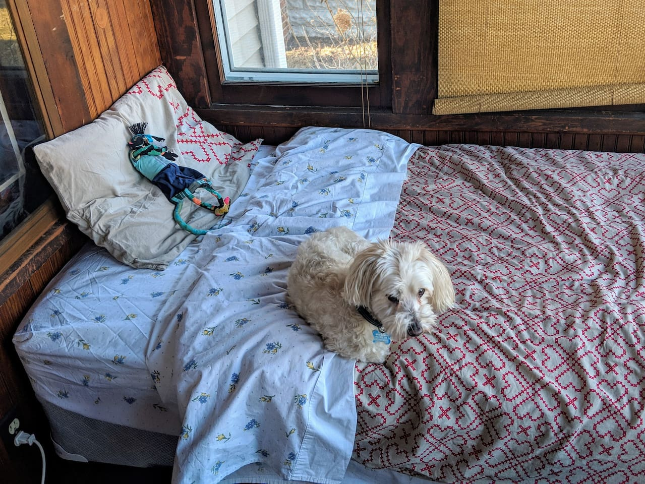 Front porch bed (this dog not included!)