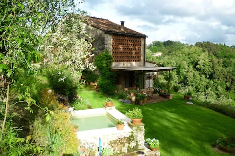 'Il Gallo' in the hills of Lucca