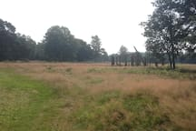 Heide en Bos 100 meter van het huis