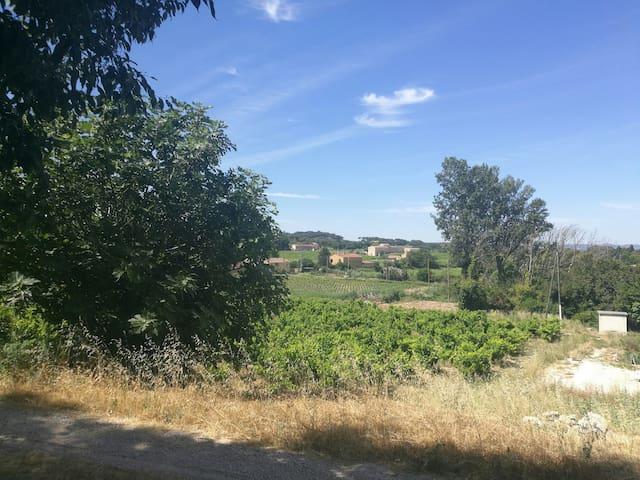 Le calme au milieu des vignes
