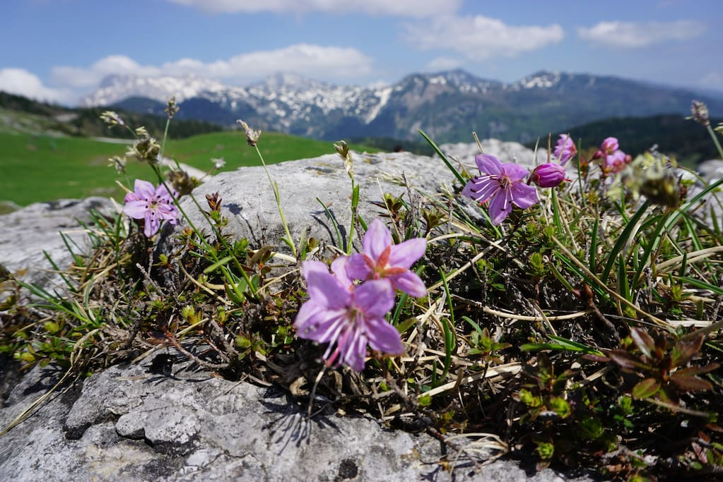 Explore the endless fields of mountain flowers from May until September.