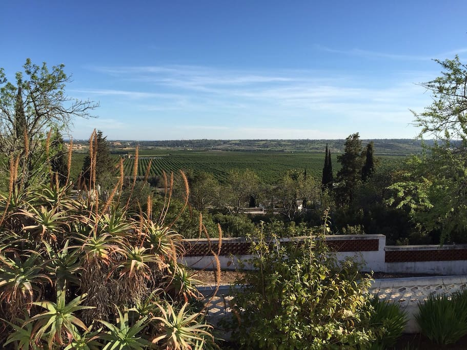 View from Casa Alegre across orange groves