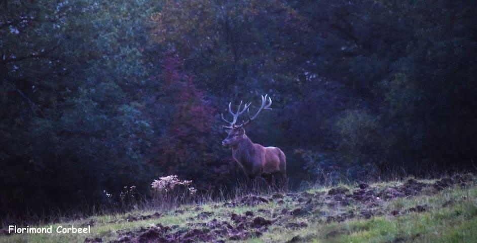 le grand roi de la forêt...