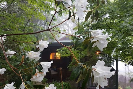 Magic in the Mists: Katoomba. Cosy+Unique Retreat! - Katoomba