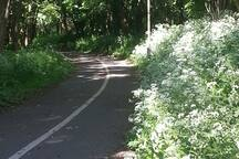 Cycle path through the meadows