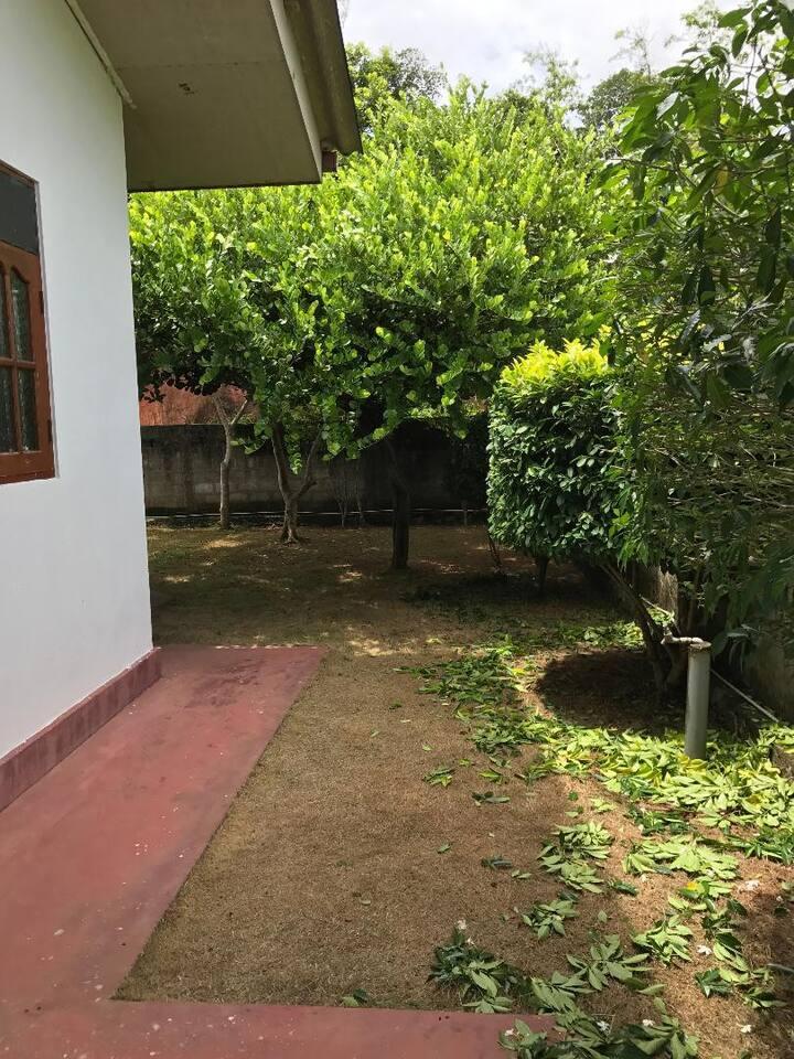 Paddy View - Induruwa.