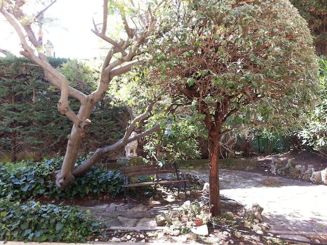 Grand jardin de 170m2 avec des Oliviers