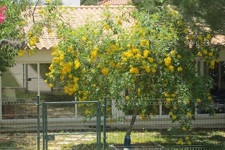 Cottage in Olhos D'Agua - อัลบูเฟรา - บ้าน