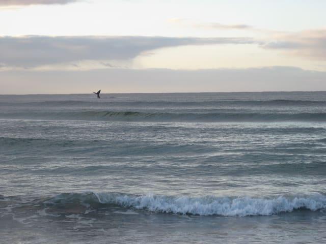 Beautiful Augusta Western Australia - Augusta - 一軒家
