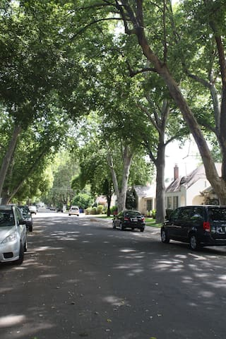 Our tree-lined street, plenty of free parking.