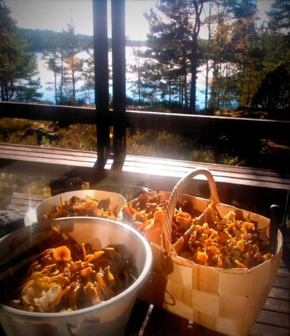 After a mushroom tour in the forest. Baskets full of chantarelles of different kind (be sure that you pick up mushrooms that you only know).