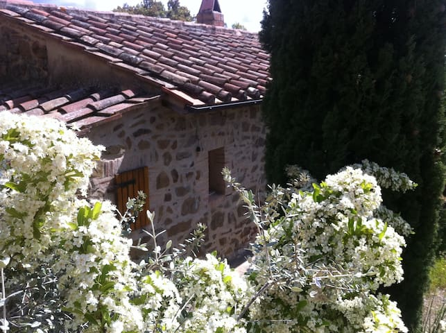 TUSCANY MAREMMA Scansano Country Home hgt 400m - Scansano - Cabana