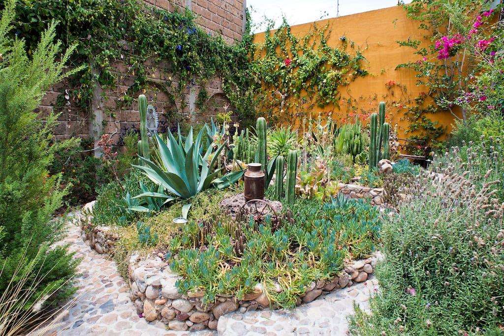 Bouganvilla & Cactus Garden