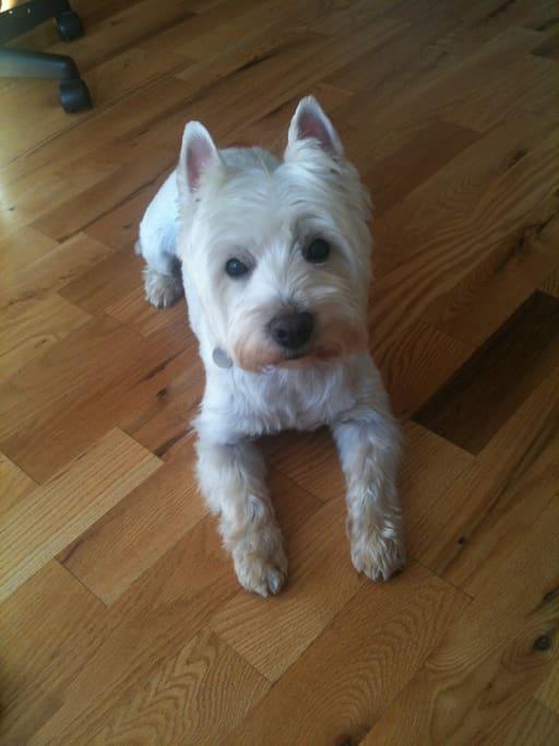 Oscar - the most friendly dog in Dublin!