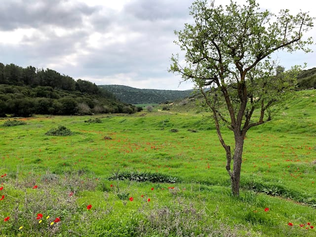 The Valley of Elah Condo. Relax, Comfort & Nature