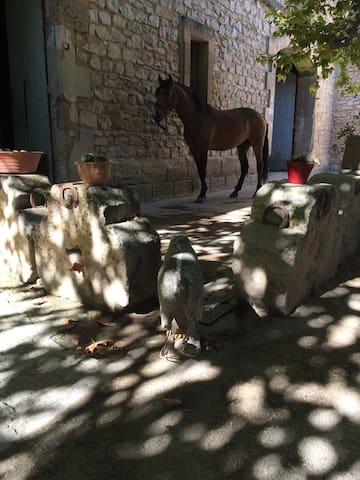 Mas en provence - Maussane-les-Alpilles - House