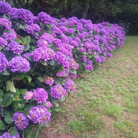 Au coeur du parc boisé de Penmarc'h Kergroades - Plourin - Flat