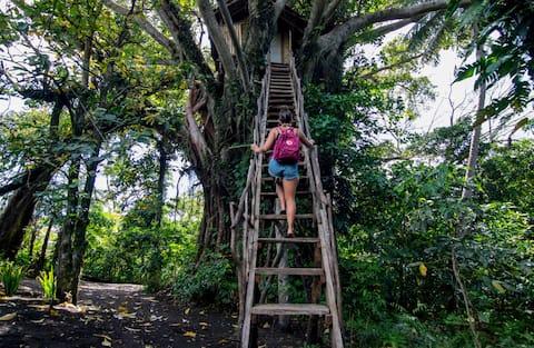 Volcano Magical Location Tree House