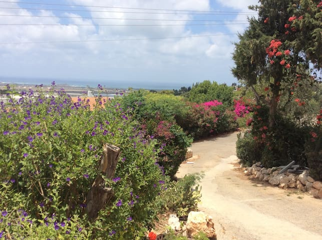 sea sight artist village apartment - Ein Hod - Pis