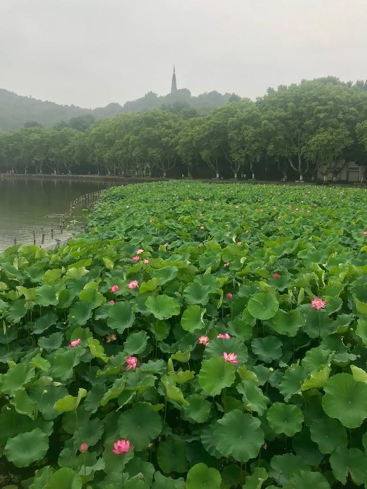 从断桥走进杭州的深处