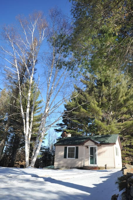 The cabin stands among birch and white pine trees 80-100 ft tall, some over 100 years old.