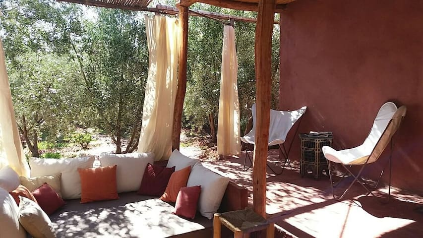 Little cabin surrounded by olive trees