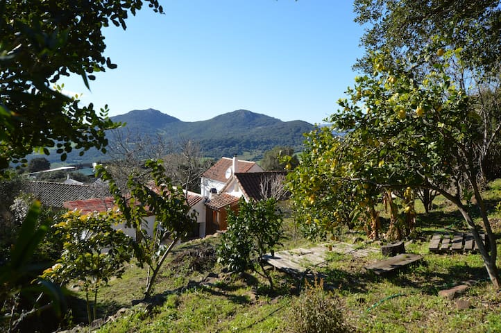 Casa del Alcornoque / Natural Reserve / Tarifa