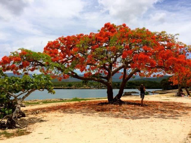 Playa de Trinidad with A/C CASA ILIANA Y PAPA 2 - La Boca