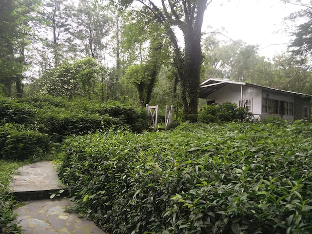 Eucalyptus Cottage at Tea Garden in Palampur - Palampur - Apartemen
